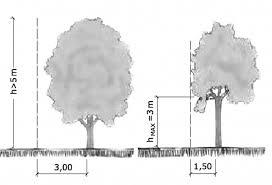 Il vicino può tagliare i rami del mio albero ?